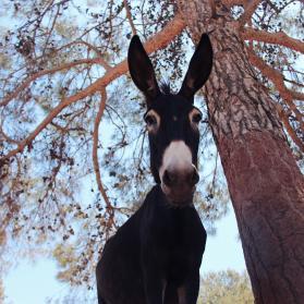 ©Photo kindly provided by Natasa Leoni for the Donkey Sanctuary (Cyprus)