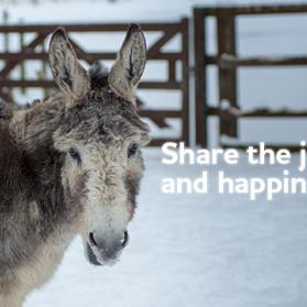 Share the joy and happiness this Christmas