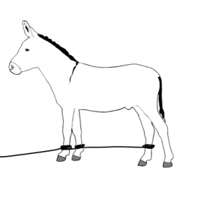 donkey tether diagram three legs?itok\=SFcNqCP3 diagram of a donkey wiring diagrams schematic