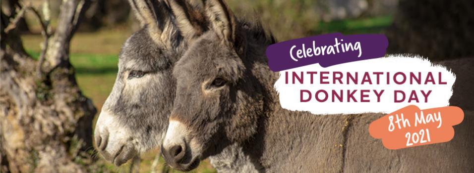 International Donkey Day